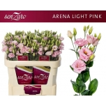 Eustoma Preeriakell Arena Light Pink