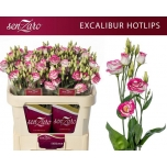 Eustoma Preeriakell Excalibur Hot Lips