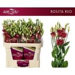 Eustoma Preeriakell Rosita Red