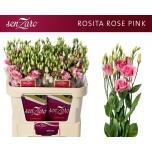 Eustoma Preeriakell Rosita Rose Pink