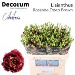 Eustoma Preeriakell Rosanne Deep Brown