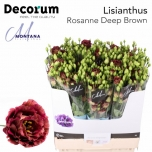 Eustoma Preeriakell Rosanne Deep Brown