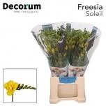 Freesia Soleil