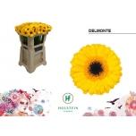 Gerbera mini Delmonte*20