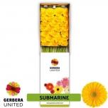 Gerbera Submarine