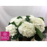 Hydrangea Hortensia 80cm Allure