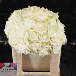Hydrangea Hortensia Schneeball 50cm