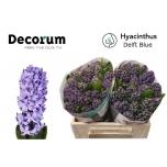 Hyacinthus Hüatsint Delft Blue