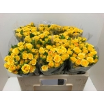 Kobarroos 50cm Yellow Babe