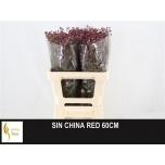 Limonium 60cm Parkjuur China Red