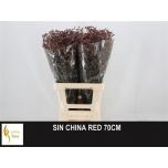 Limonium 70cm Parkjuur China Red