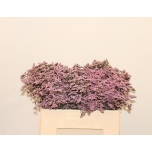 Limonium 50cm Parkjuur Safora Oshi Pink