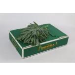 Phlebodium leht 45cm Kuldimar pk
