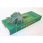 Phlebodium leht 55cm Kuldimar pk