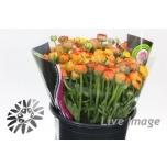 Ranunculus Tulikas oranž