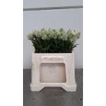 Trifolium 40cm Ristik