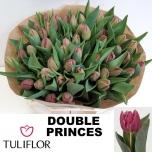 Tulp Double Princes