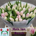 Tulp Huis Ten Bosch