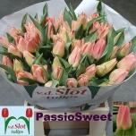 Tulp Passio Sweet
