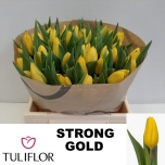Tulp Strong Gold