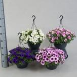 Petunia Petuunia 23cm