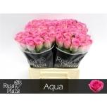 Roos 40cm Aqua