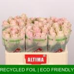 Roos 50cm Pink Athena