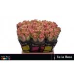 Roos 40cm Belle Rose