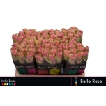 Roos 50cm Belle Rose
