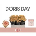 Roos 50cm Doris Day
