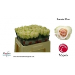Roos 50cm Jeanette