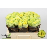 Roos 50cm Lemon Zeste