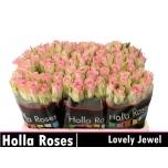 Roos 50cm Lovely Jewel