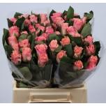 Roos 40cm Light Pink Tacazzi