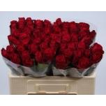 Roos 50cm Madam Red
