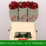 Roos 80cm Madam Red