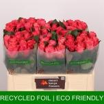 Roos 50cm Pink Tacazzi