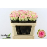 Roos 70cm Pink Journey