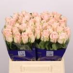 Roos 40cm Pink Wedding