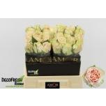 Roos 40cm Wedding Rose
