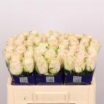 Roos 50cm Wedding Rose