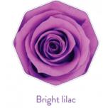 Stabiliseeritud  Rosa Media Bright Lilac 8TK