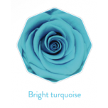 Stabiliseeritu Rosa Premium Turquoise 4TK