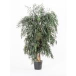 Stabiliseeritud Wide Tree Nicoly 1.30 Green