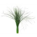 Stabiliseeritud Beargrass Vert 50/80 1 pakk