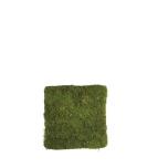 Stabiliseeritud sambla paneel Flat moss panel 1x1m