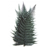 Stabiliseeritud Brilliant Fern 30/40