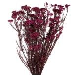 Stabiliseeritud H.DIOSMI burgundy 1 pakk