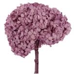 Stabiliseeritud Hortensia  lilla 1TK