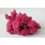 Stabiliseeritud Põdrasamma Raindeer Moss 500g dark pink